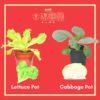 [Pre-Order]Organic Lettuce Pot + Cabbage Pot